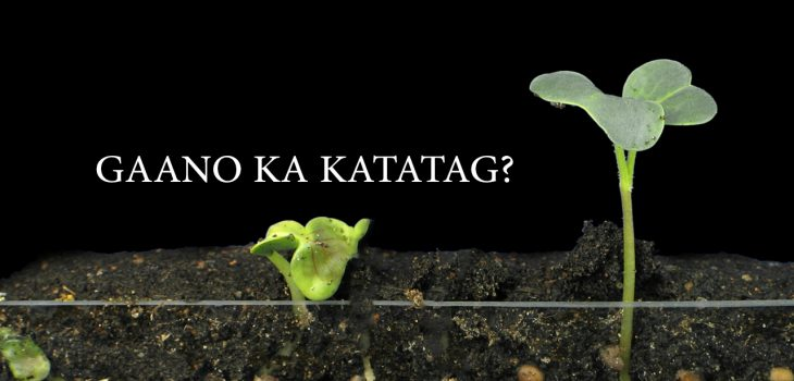 Gaano Ka Katatag?